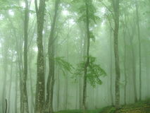 雾的森林 免版税库存图片