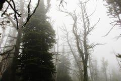 雾的森林 图库摄影