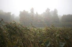 雾的湖 免版税库存图片