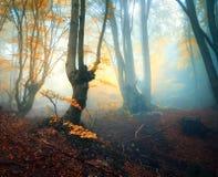 雾的神仙的森林 秋天森林 被迷惑的秋天森林 库存图片