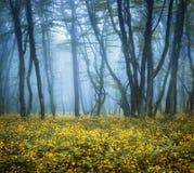 雾的神奇黑暗的森林与绿色叶子和花 免版税库存照片