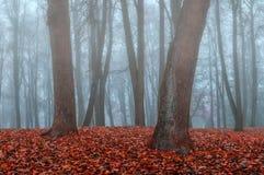 雾的秋天公园-秋天有薄雾的哥特式风景 免版税库存图片