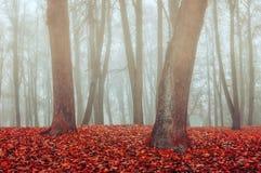 雾的秋天公园-秋天有薄雾的哥特式风景 图库摄影