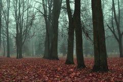 雾的秋天公园-秋天有薄雾的风景 免版税库存照片
