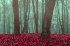 雾的秋天公园-秋天有薄雾的风景 库存图片