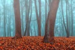 雾的秋天公园-秋天有薄雾的风景 免版税图库摄影