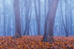 雾的秋天公园-秋天有薄雾的风景 图库摄影