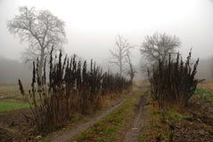 雾的秋天森林:沿木树篱的一串国家足迹带领入丛林,雾,树剪影能被看见 免版税图库摄影