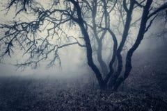雾的秋天森林 自然美好的横向 例证百合红色样式葡萄酒 免版税库存图片