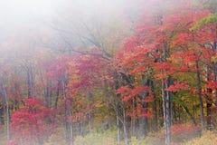 雾的秋天森林 免版税库存图片