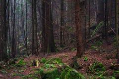雾的美丽的具球果山森林 自然本底 库存图片