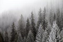 雾的冻冬天森林 免版税库存照片