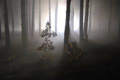 雾的01黑暗的夜森林 库存图片