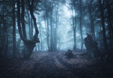 雾的黑暗的秋天森林 自然美好的横向 免版税库存图片