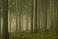 雾的01森林 免版税库存照片
