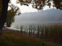 雾的Forest湖 图库摄影