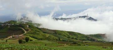 雾盖子圆白菜农场 免版税图库摄影