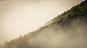 雾盖子森林 库存照片
