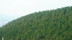 雾盖子绿色森林小山山 影视素材