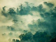 雾神秘主义者在山的森林里 库存图片