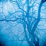 雾结构树冬天 免版税库存图片