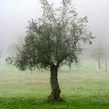 雾结构树 免版税库存图片