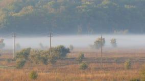 雾美好的风景风景在村庄平原的 以秋天雾为背景的输电线 股票录像