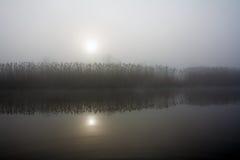 雾芦苇 免版税库存图片