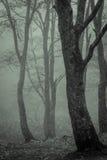 雾透湿的树,音调 免版税库存照片