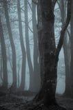 雾透湿的树 图库摄影