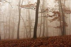 雾通过森林 免版税库存图片