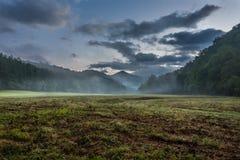 雾通过象草的谷吹在夏天 库存图片