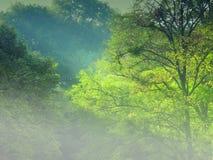 雾金黄结构树 免版税图库摄影