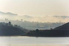 雾,山,杉木森林 库存图片