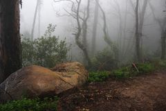 雾,森林,葡萄牙,玄妙,自然 库存照片