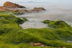 雾延长了海草 库存图片