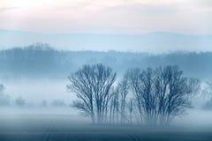 雾 库存图片