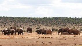 需要家庭-非洲人布什大象 免版税图库摄影