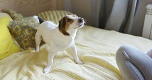 震动在床上的狗在卧室 影视素材