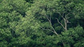 震动在风的大树 影视素材