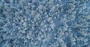 震动树上面的星期风的空中射击深深地报道由雪 4K 股票录像