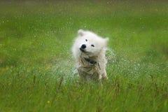 震动的狗 免版税库存图片