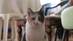 震惊猫 库存照片