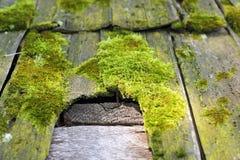 霉菌损伤细节在木屋顶的 免版税库存图片