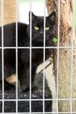 霍什奇诺,波兰, 2017年11月12日:一只猫关在监牢里在shel的 免版税库存照片
