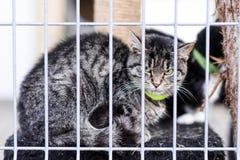 霍什奇诺,波兰, 2017年11月12日:一只猫关在监牢里在shel的 免版税图库摄影