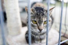 霍什奇诺,波兰, 2017年11月12日:一只猫关在监牢里在shel的 免版税库存图片