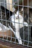 霍什奇诺,波兰, 2017年11月12日:一只猫关在监牢里在shel的 库存图片