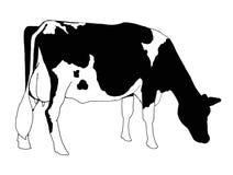 霍尔斯坦母牛徒手画的剪贴美术  免版税图库摄影