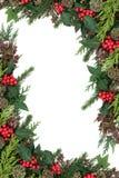 霍莉和冬天植物群边界 库存照片